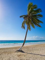 Paradise (C.Mson) Tags: palm palmtree beach ocean paradise mexico coconut