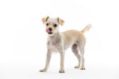 Dixie-3.jpg (___INFINITY___) Tags: 6d animal canon darrenwright dazza1040 dog eos infinity portrait puppy strobist
