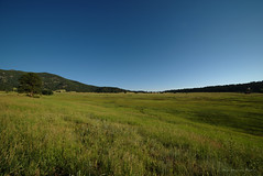 Elk Meadow Open Space (KnuckKnasty) Tags: openspace colorado hiking summer mountains green meadow frontrange outdoors solitude evergreen mountain trees wildflower wildflowers vacation travel explore morningsun morning rural countryside hills rollinghills