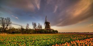 Old Dutch mill