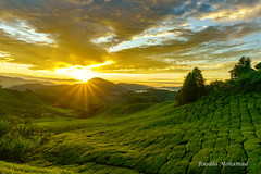 1st light at Cameron Highlands (Rusdhi Mohamad) Tags: sunrise cameron highlands golden sky blue clouds tea plant trees sun rays beautiful morning malaysia green hill house