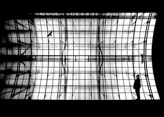 aviary (heinzkren) Tags: voliere bird man light fantasy composing glass roof schwarzweis bw sw monochrome panasonic lumix silhouette vogel mann gitter grid magic mystery käfig animal vienna wien wideangle weitwinkel cage lines blackandwhite framework gerüst indoor glasdach glassroof vision illusion