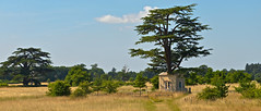 TREE HOUSE (chris .p) Tags: nikon d610 worcestershire croome park england uk nt nationaltrust capture trees treehouse view summer 2018 landscape july