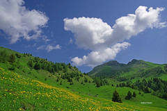 They are the Champions (stefano.chiarato) Tags: montagne mountains prati fiori flowers nuvole clouds valdiscalve bergamo lombardia italy paesaggio landscape pentax pentaxlife pentaxk70 pentaxart