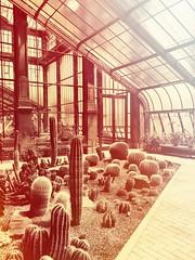 Wer im Glashaus geht (bornschein) Tags: kakteen sukkulenten indoor city germany badenwürttemberg karlsruhe gewächshaus glashaus
