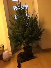 2017-12-18_15-30-40_IMG_9195
