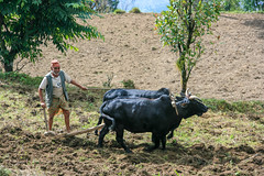 Kaskikot (RunningRalph) Tags: nepal sarangkot kaskikot westerndevelopmentregion np