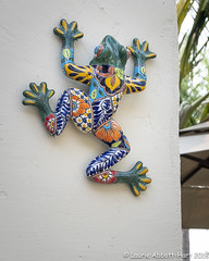 20180715  ODC16189 (Laurie2123) Tags: fujixt2 laurieturnerphotography laurietakespics laurie2123 odc ourdailychallenge backyard frog ceramic