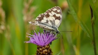 Butterfly - 5540