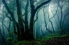 Niebla en el bosque (JACRIS08) Tags: bosque forests niebla