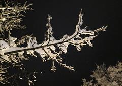 Zakopane-November'17 (37) (Silvia Inacio) Tags: zakopane poland polónia polska snow neve tree árvore night noite