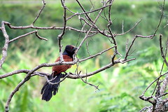 IMG_1937 (mohandep) Tags: wildlife gulakmale tkfalls bannerghatta lakes birding insects butterflies plants nature ugs
