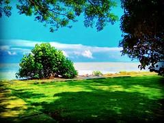 Pontian District, Johor https://goo.gl/maps/E1Z5bJqmunL2  #travel #holiday #Asian #Malaysia #旅行 #度假 #亞洲 #馬來西亞 #trip #traveling #beach #海滩 #pantai #วันหยุด #การเดินทาง #ホリデー #휴일 #여행 #праздник #путешествие #ビーチ #바닷가 #ชายหาด #пляж #tree  #Johor #Pontian #blu (soonlung81) Tags: trip วันหยุด vacanza johor beach malaysia путешествие resa bluesky 휴일 pontian 馬來西亞 旅行 пляж reise spiaggia nature semester pantai ชายหาด 여행 asian plage voyage 大自然 strand 海滩 度假 바닷가 traveling ビーチ urlaub ホリデー การเดินทาง holiday праздник tree vacances fiesta viaggio 亞洲 viaje travel