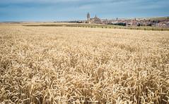 Castilla fields (Ignacio Ferre) Tags: segovia comunidaddecastillayleón españa spain castilla field campo nikon paisaje landscape cereal trigo airelibre rural wheat crop cultivo nature naturaleza