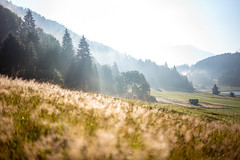 Sonne vs. Nebel (Chris Buhr) Tags: wagenbruechsee wagenbrüchsee gerold geroldsee landschaft natur nebel fog foggy sunrise morgen sommermorgen sommer summer leica summilux offenblende bokeh weis outdoor
