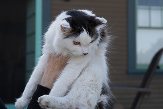 The Cats of University Heights: Gracie