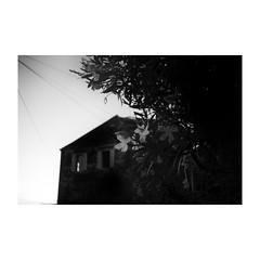 dubrovnik (s_inagaki) Tags: snap monochrome flower walking bnw street モノクロ oldlens flowers 白黒 bw 散歩 vintagelens blackandwhite dubrovnik 夕暮れ スナップ croatia ドゥブロヴニク オールドレンズ 花 dusk クロアチア industar69