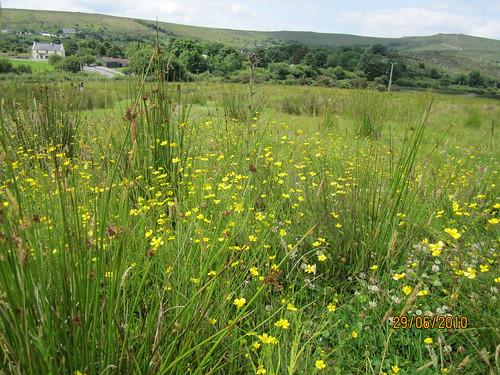wet grassland Connemara
