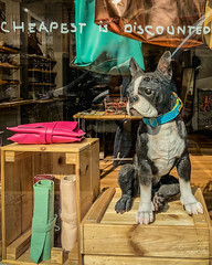 20180721-IMG_0846 How much is that doggy in the window? (susi luard 2012) Tags: ryan street church dog figure greenwich leather london sculpture se10 shop uk