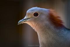 the world through his eyes... (@Katerina Log) Tags: bird wildlife wild feathers bokeh depthoffield beak outdoor attikazoopark katerinalog natura nature sonyilce6500 portrait