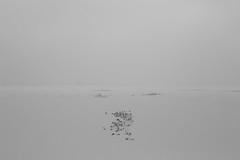 from here to eternity (Mindaugas Buivydas) Tags: lietuva lithuania bw winter february minimal minimalism favoriteplaces delta nemunasdelta nemunasdeltaregionalpark nemunodeltosregioninisparkas memelland sadnature mindaugasbuivydas