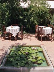 Persian Garden (nima.mojiz) Tags: nikon f100 nikonf100 analog film filmphotography streetphotograohy tehran iran dailylife agfa agfavista agfa400 agfavista400 analogphotography filmisnotdead