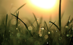 . (murjianna) Tags: nebel morgentau gras frühling leipzig