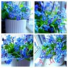 Blue flowers (andreea_mihailiuc) Tags: google flower spring garden andreeamihailiuc blue colors weding soul relaxing wedding marriage search samsung arrangements things macro flickr day light
