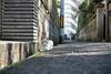 猫 (fumi*23) Tags: ilce7rm3 sony 55mm sel55f18z cat chat gato neko bokeh dof animal street alley miyazaki sonnartfe55mmf18za emount ねこ 猫 宮崎 街の猫 sonnar