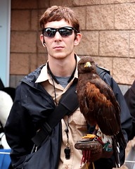 Falcon (Prayitno / Thank you for (12 millions +) view) Tags: konomark sw sd sea world san diego ca california birdofprey falcon young handsome youth man outdoor activity watch guard guardian keeper trainer trained day time