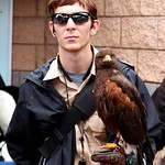 Falcon thumbnail