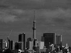 Mono Tokyo モノクロ東京 (Shutter Chimp: Im back!) Tags: japan tokyo building sky skytree tree crane mono monochrome black white skyline 東京 日本 空 スカイツリー モノクロ モノクローム ビル クレーン スカイライン city 街