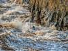 Man Against The River (jiroseM43) Tags: river kayaking potomacriver greatfalls olympus em1markii m43 45200mm
