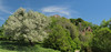 Nature prevails (filippo rome) Tags: monterano anticamonterano ruins rovine lazio italy nature natura spring primavera colors colori landscape panorama parco park trees alberi flowers flower fioritura