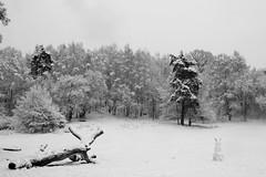 IMG_9666 (Lauro Meneghel) Tags: sweden svezia stockholm stoccolma winter inverno snow nature neve natura cold freezing freddo trees