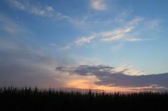 as the sun dipped below the horizon (Moon Rhythm) Tags: moon sunset skyscape skyrhythm moonrhythm rural crescent waxing westernsky easternshore maryland farm cornfield