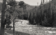 Gibbons River (Jim Frazier) Tags: 2018 201807montana 201807yellowstone 3d3layer bw ariverrunsthroughit bank bends blackandwhite contemplative country curves desaturated flora gibbonsriver jimfraziercom july landscape leadinglines monochrome mountains mountainsides nationalpark natural nature nps oldified peace peaceful plants quiet rapids riparian river riverbank riverfront riverside rockymountains rural rustic scenery scenic sepia serene summer trees vacation water winding wyoming yellowstone q3 instagram