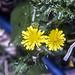 Minie Flowers2