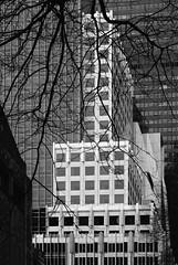 NYC Arch & Trees #33 (Ximo Michavila) Tags: nyc tree winter newyork city usa abstract windows building urban ximomichavila graphic architecture archdaily archidose archiref glass lines contrast grey blackwhite bw monochrome