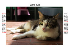July 2018 (Alfredo Liverani) Tags: 7dayswithflickr 7dwf fauna canong5x canon g5x pointandshoot point shoot ps flickrdigital flickr digital camera cameras europa europe italia italy italien italie emiliaromagna romagna faenza faventia faience animal kitten gatto gatta gatti gatte cat cats chats chat katze katzen gato gatos pet pets tabby furry kitty moggy moggies gattino animale ininterni animaledomestico aliceellen alice ellen calendario calendar kalender