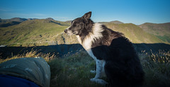 26/52 Wish You Were Here (JJFET) Tags: 26 52 weeks for dogs paddy border collie mountain
