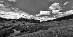 By the provincial river (Pavel Gusev) Tags: landscape black white stream river summer august russia clouds sky grass forest trees reed slope ravine gully perspective horizon water blackandwhite