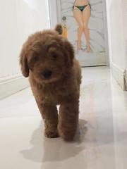 Ginger's beautiful Olga!
