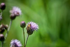 bug zug zug (avflinsch) Tags: ifttt 500px petal pollen flower wildflower blooming head bud delicate floral bug thistle zugzug summer