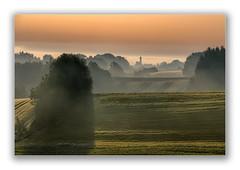 Morgennebel (Robbi Metz) Tags: deutschland germany bayern bavaria reischenau augsburgwestlichewälder landscape forest trees sunrise fields fog colors canoneos