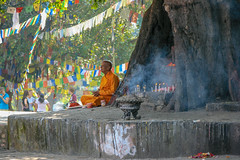 Bodhi Tree (RunningRalph) Tags: lumbini nepal lumbinisanskritik westerndevelopmentregion np