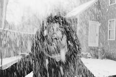 model & portrait (eva michie) Tags: black white bw snow snowfall winter girl snowing coat jacket cold camera digital canon artsy creative action