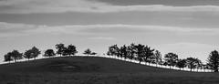 The treeline (Dom Haughton) Tags: trees tree treescape trossachs scotland canoneos70d canon caledonia westhighlandway nature landscapephotography landscape outdoor countryside mono black white preto y branco bianco e nero blancoynegro blancetnoir