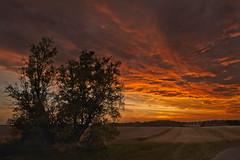 später Sonnenuntergang (herberthowe) Tags: sonnenuntergang landschaft mecklenburg felder weites land abendstimmung himmel abendhimmel abendlicht