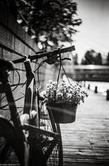 """Accidental Art"" (Jesse Väisänen) Tags: wallpaper ishootfilm 35mm film filmi photography monochrome blackandwhite black white agfa apx 100 minimalistic minimalist atmosphere atmospheric ricoh xr500 auto rikenon 50mm dof blur bike bicycle"